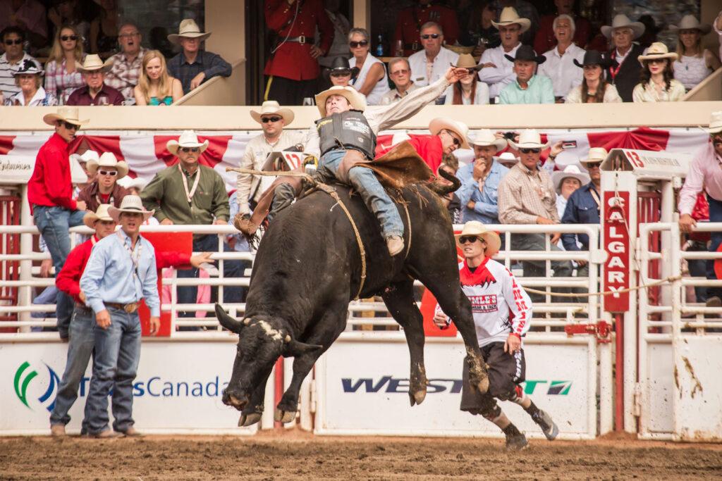 Tjurridning på Calgary Stampede rodeo.